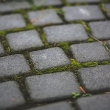 garden-moss-stone-sett
