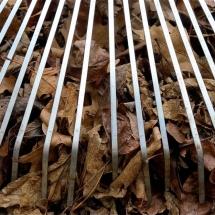 rake leaf cleanup